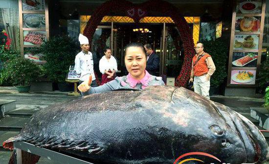 开年大吉!琼海渔民元旦捕获260多斤石斑鱼