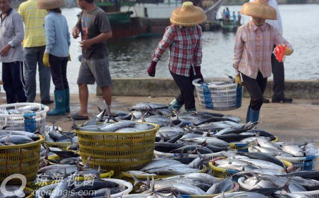 琼海:清明时节渔市旺 