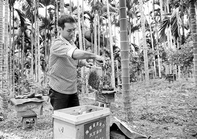 林下养蜂产业落地琼海南通村绘出昔日贫困村小康梦