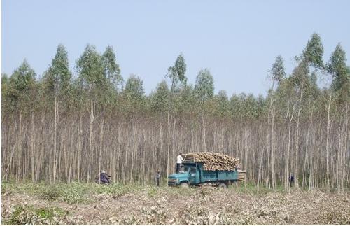 借砍台风倒树无证滥伐林木一琼海男子被刑拘