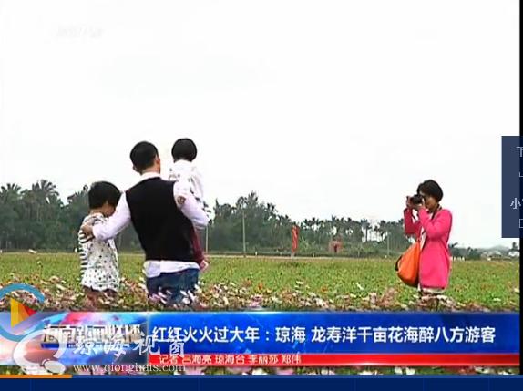 红红火火过大年:琼海 龙寿洋千亩花海醉八方游客
