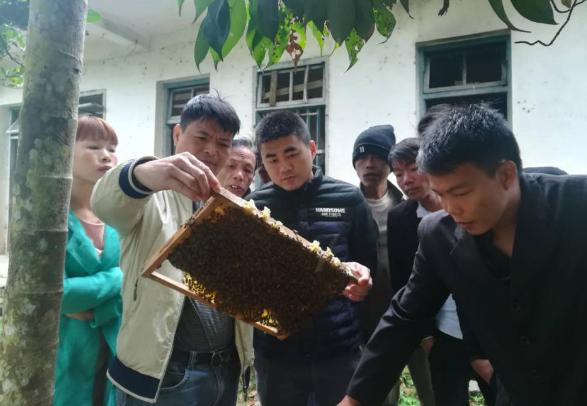 省畜牧技术推广站深入石壁举办十九大精神宣讲暨养蜂技术培训班