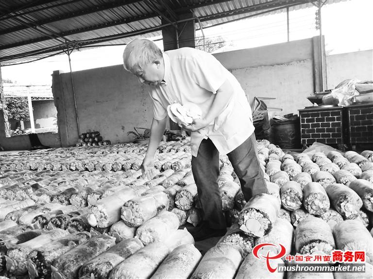 海南:灵芝带动琼海贫数百贫困户脱贫增收