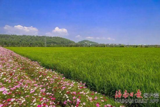 博鳌国家农业公园繁花盛开水稻郁郁葱葱。袁琛摄