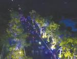 琼海举行田野荧光跑等活动 吸引众多市民游人参与