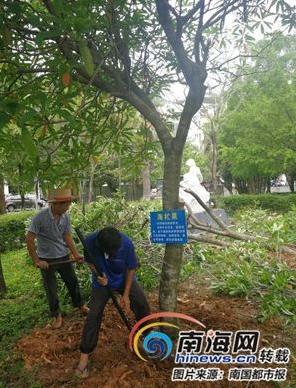 琼海排查有毒花木 12棵海芒果数十株夹竹桃被铲除