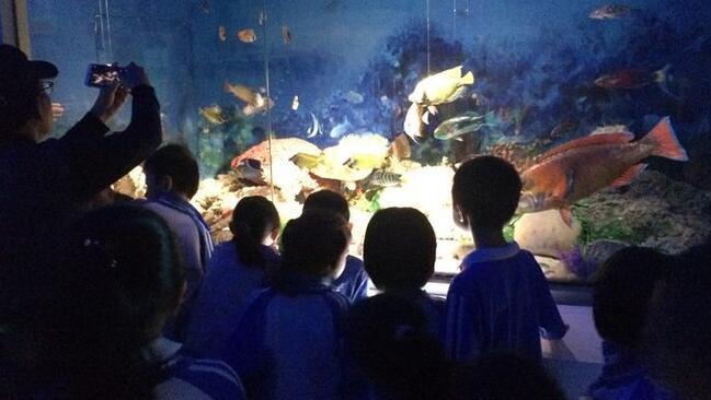 """长江学校一年级开展""""蓝色南海我的家""""研学活动"""