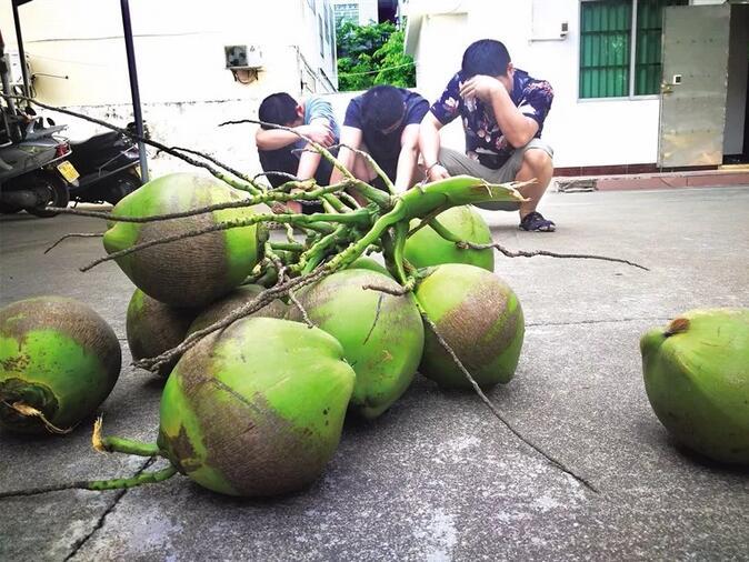 3男子琼海偷11个椰子被拘5天